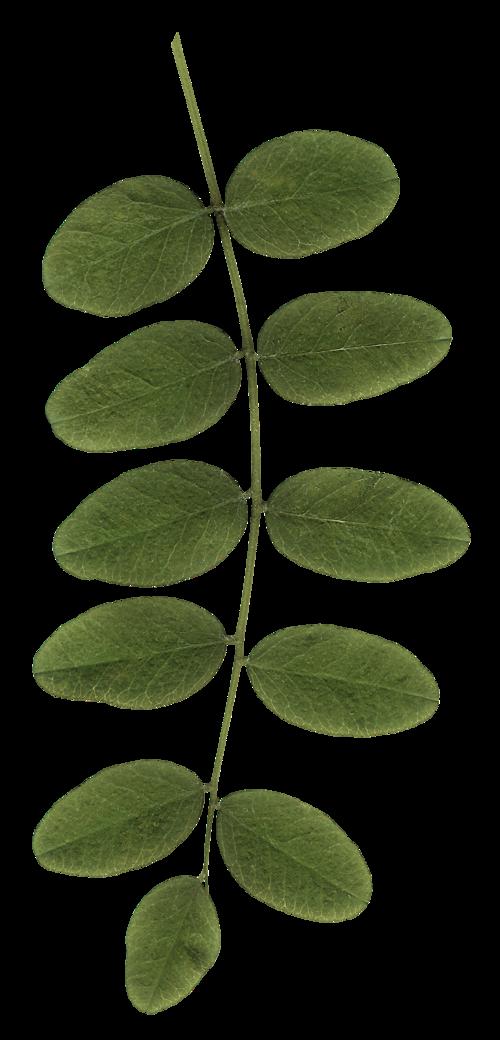 SP_Gabby_Foliage_2