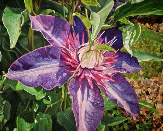 A Passion for Purple - Andrea Brokenshire, Round Rock, Texas, USA