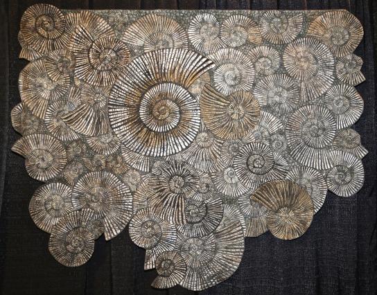 Pyrite Ammonites - by Kimberly Lacy, Colorado Springs, Colorado USA