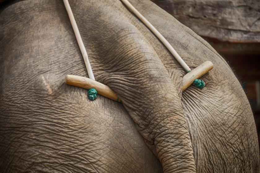 Elelephant 1.