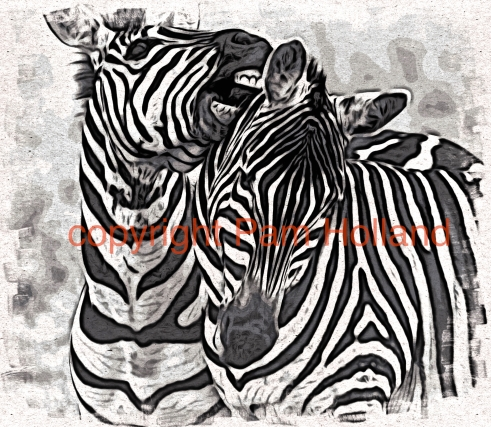 zebra 2Pam Holland