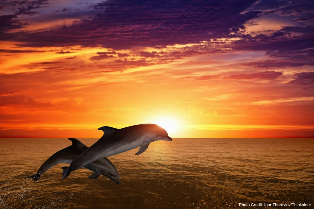 dolphins-fort-myers-sunset-cruise.jpg